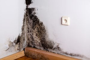 Mold Remediation Colesville