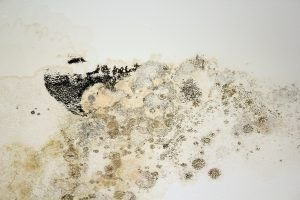 5 Steps To Mold Prevention