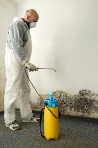 What Exactly Is Mold Remediation?